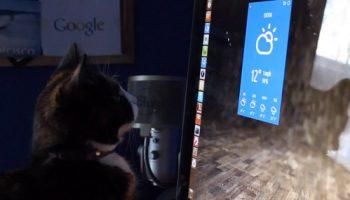 ubuntu-cat
