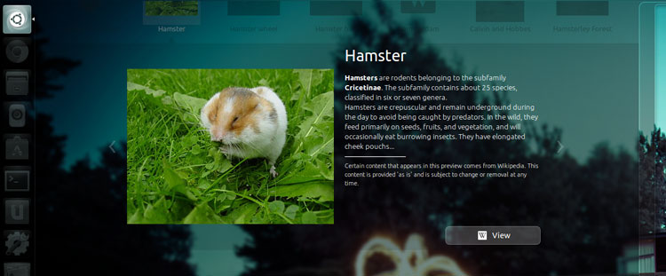 Hamsters in the Dash - Great Band Name