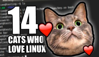 cats who love linux
