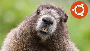 Bionic Beaver is the Ubuntu 18.04 name