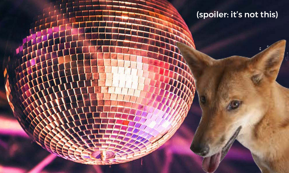 disco dingo disco ball