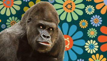 groovy-gorilla-2