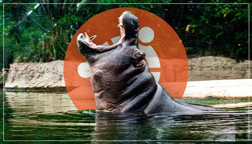 hippo and ubuntu logo