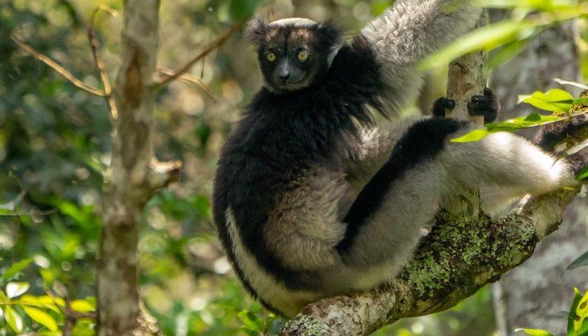 An Idri animal photo